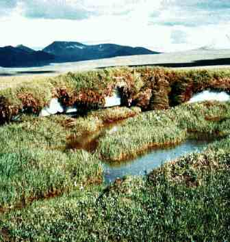 The flat lands of the alaskan tundra