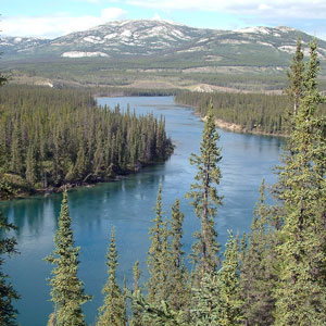 the Yukon river is Alaska's largest river and full of King salmon